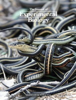 Cover: Journal of Experimental Biology